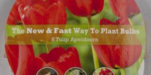 Apeldoorn Tulip Easy Bloom Pad Garden Plant