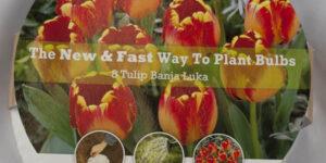 Banja Luka Tulip Easy Bloom Pad Garden Plant