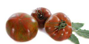 Black Krim Tomato Garden Plant