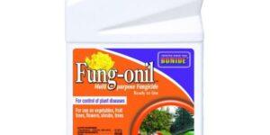 Bonide Fung-onil Fungicide Concentrate Garden Plant