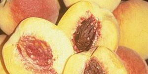 Bonita Peach Tree Garden Plant