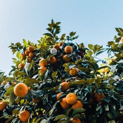Bouquet de Fleurs Orange Tree Garden Plant