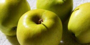 Ginger Gold Apple Tree Garden Plant