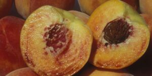 Honey Babe Peach Garden Plant