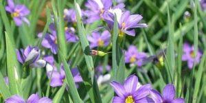 Lucerne Grass Garden Plant