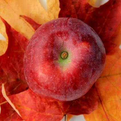 Macoun Apple Tree Garden Plant