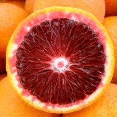 Moro Blood Orange Tree Garden Plant