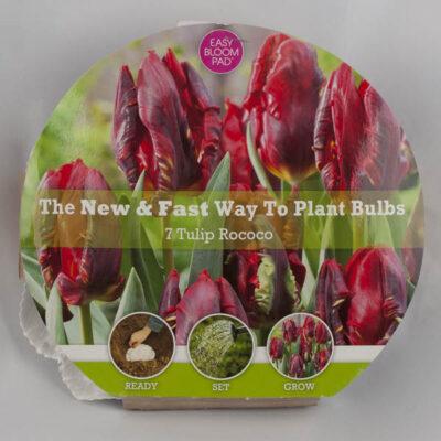 Rococo Tulip Easy Bloom Pad Garden Plant
