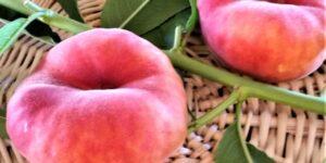 Scarlet Halo Peach Garden Plant