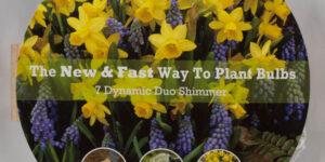 Shimmer Easy Bloom Pad Garden Plant