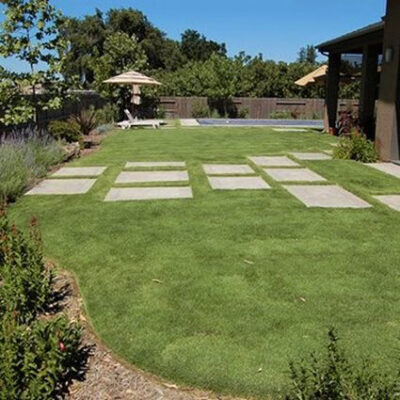 UC Verde Buffalo Grass Plugs Garden Plant