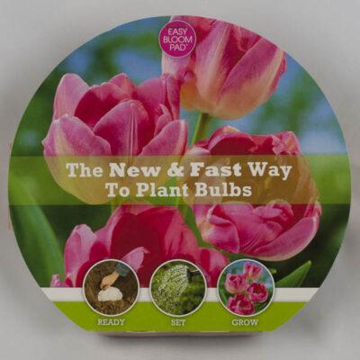 Upstar Tulip Easy Bloom Pad Garden Plant