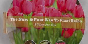Van Eijk Tulip Easy Bloom Pad Garden Plant