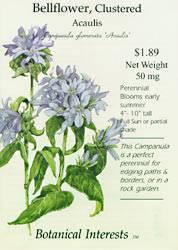 Bellflower Acaulis Seeds