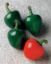 Hot Peppers Cherry Bomb Annual