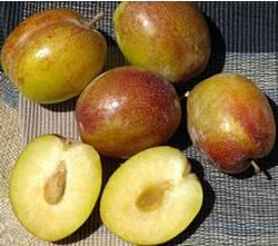 Flavor Grenade Fruit Tree