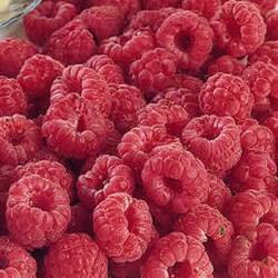 Raspberry Latham Small Fruit