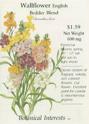 Wallflower English Bedder Mix Seeds