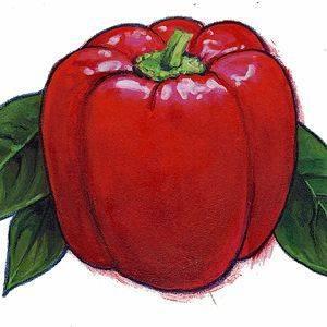 Pepper Tennessee Cheese Organic Organic Plant