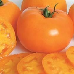 Tomato Orange Blossom Organic Organic Plant