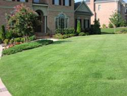 Zoysia Grass Plugs Turf Grass